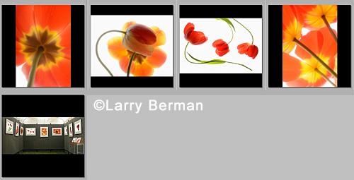 tulips jury set of images