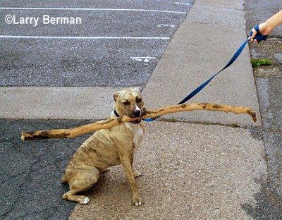 speak softly and carry a big stick