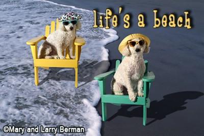 500-beach-dogs-2015