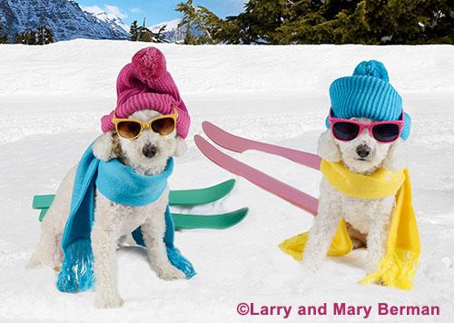 500-ski-dogs