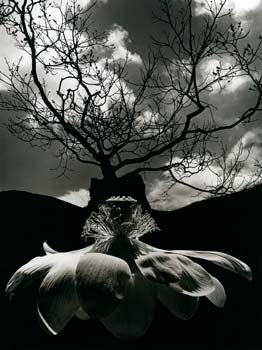 the life and work of jerry uelsmann a photographer