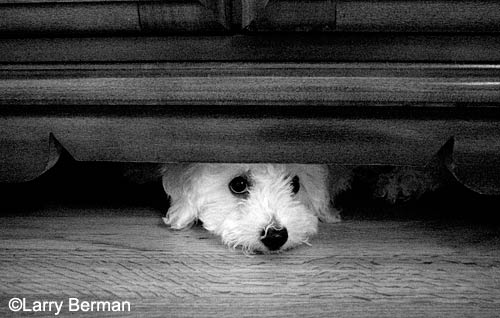 puppy under the furniture