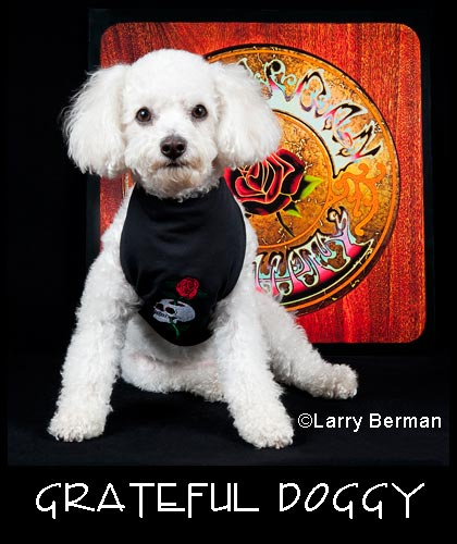 Grateful Dead Doggy
