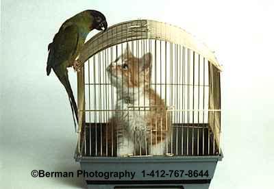 http://bermangraphics.com/images/CatBirdCage2.jpg
