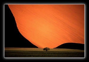 Sand Dune with Tree by Pete Turner